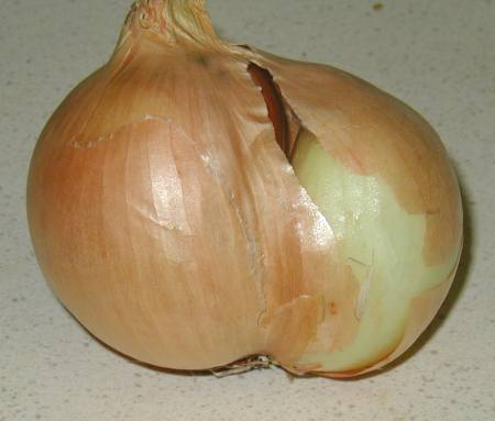 Conjoined Onion